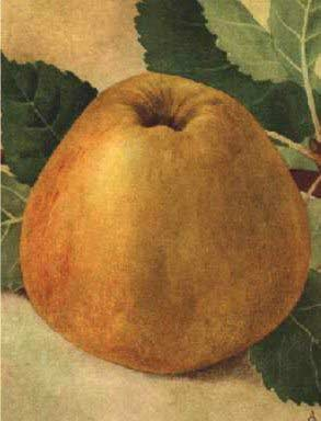 Van appel tot hete bliksem